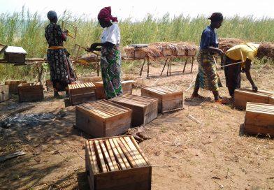 A Rumonge, les femmes pratiquent elles aussi l'apiculture